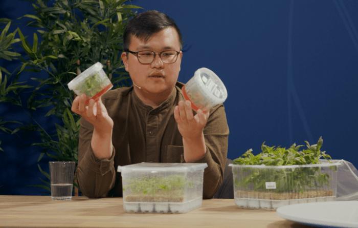 viscon tv cannabis thumbnail