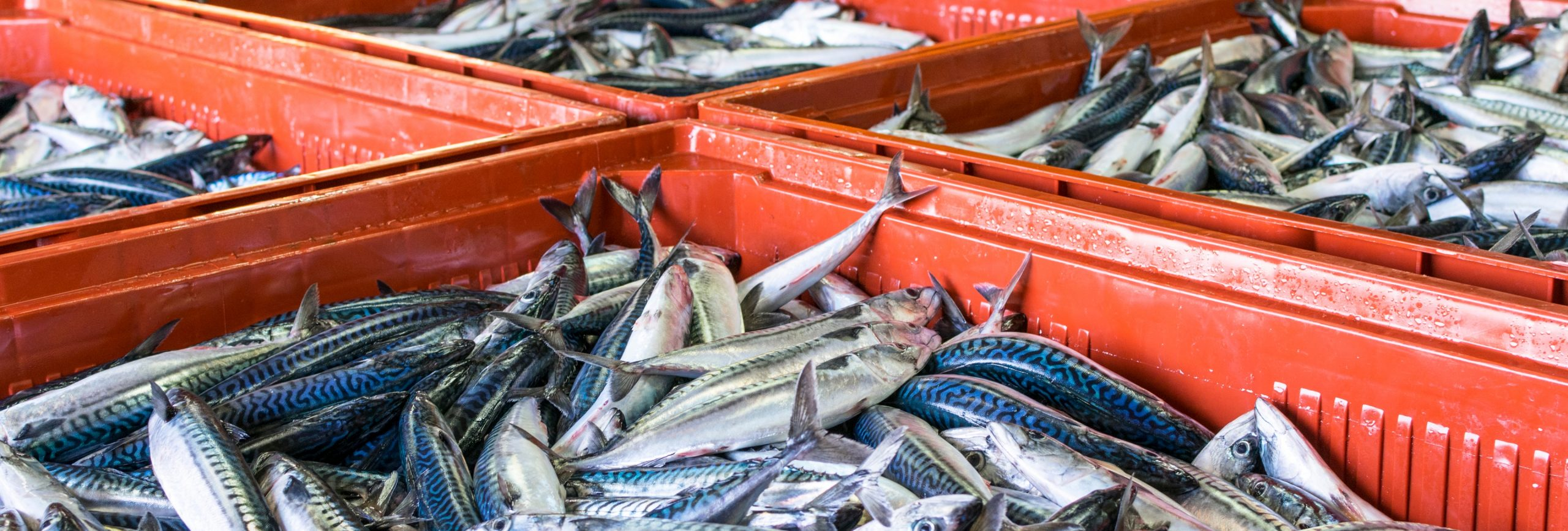 Fish crates on a fish market